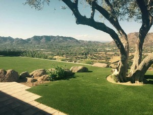 Phoenix area artificial grass landscaping.